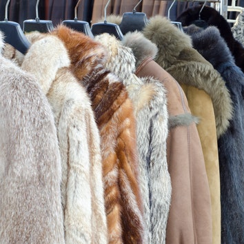 Израиль стал первой страной в мире, запретившей продажу изделий из меха